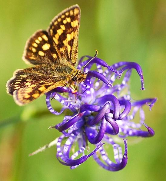 purple flower with butterfly