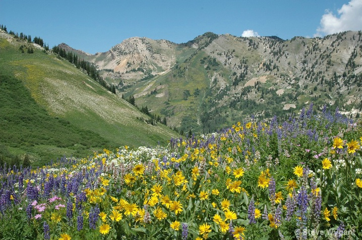 Albion Basin and Mt. Superior