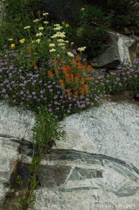 Catherine Lake Wildflowers