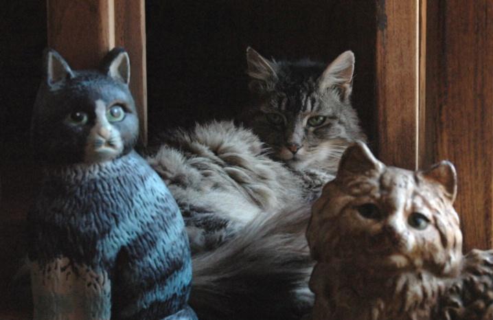 Cat Among Cats