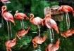 Pretty Birds all ...