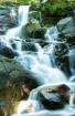 Springbrook Creek