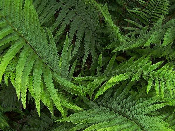 rolling ferns