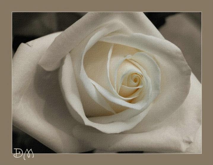 Sepia Rose I