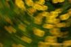 Whirling Daisy De...