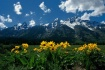 Wildflowers and t...