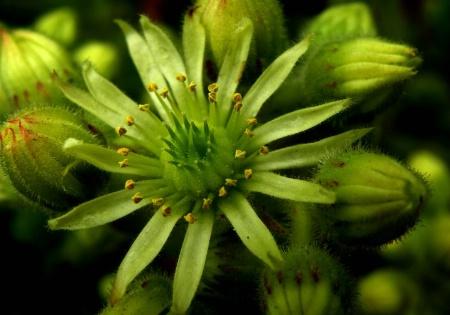Strange green blooms