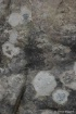 Granite and liche...