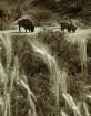 Buffalo Grass Sep...