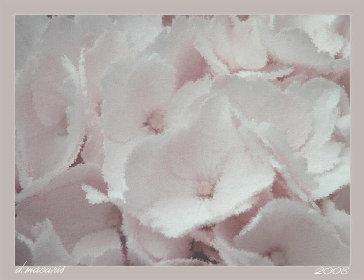 Hopeful Hydrangea
