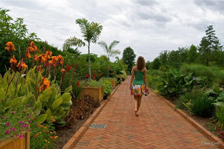 A walk in the garden...