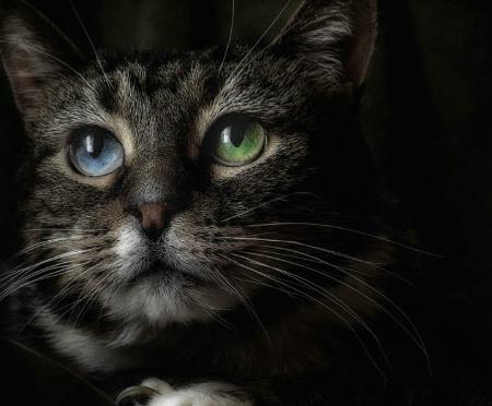 Callie #3