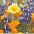 © Phil Burdick PhotoID # 6488459: spring_splendor