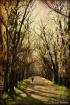 Walking Among the...