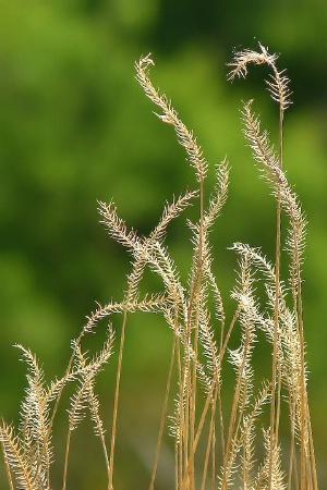 Last Year's Grass