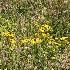 © Jacqueline M. Stoken PhotoID# 6514472: Prairie Flowers
