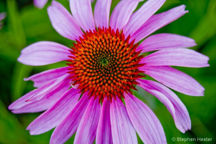 Complementary Flower