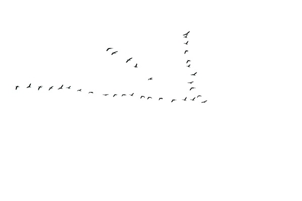 34 birds