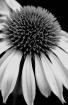 Film grain flower...