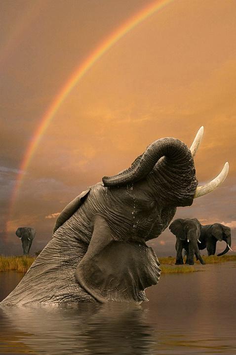 Elephant Paradise