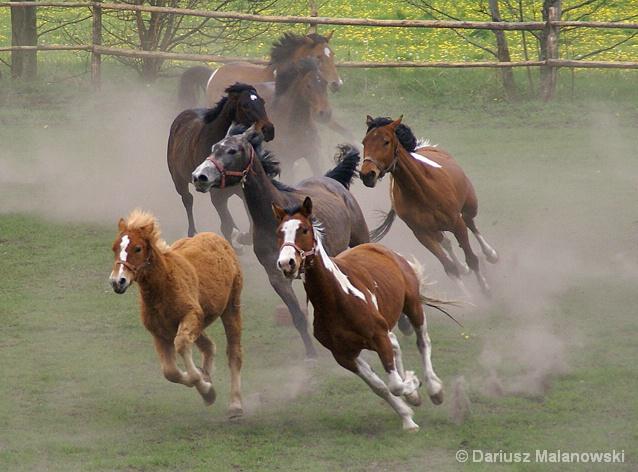 horses... horses