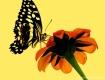Butterfly Portrai...