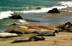 Elephant Seals, P...