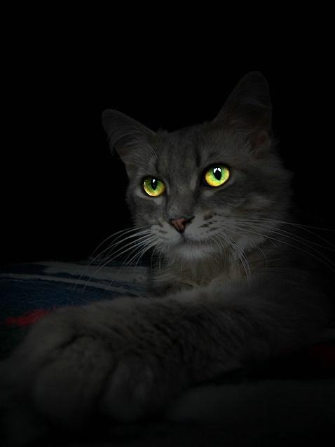 Eye's of the Night
