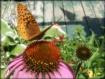 Butterfly snackin...