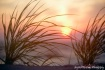 Beach Sun Rise