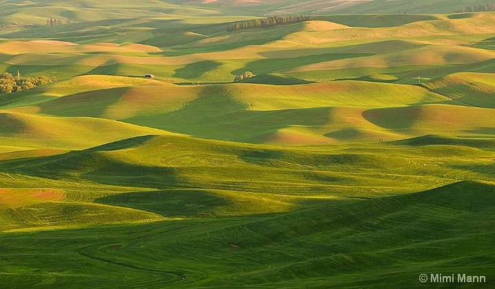 palouse-hills_mm10351- - ID: 6600976 © Marilynn Mann
