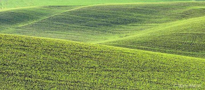 palouse-hills_mm10357-- - ID: 6600977 © Marilynn Mann