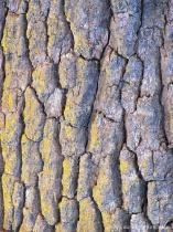 Oak Tree Textures