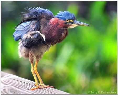 Baby in the Wetlands