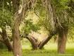 splittree