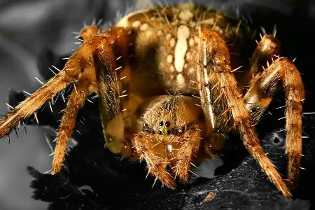 <B> Mr. O. W. Spider</b>