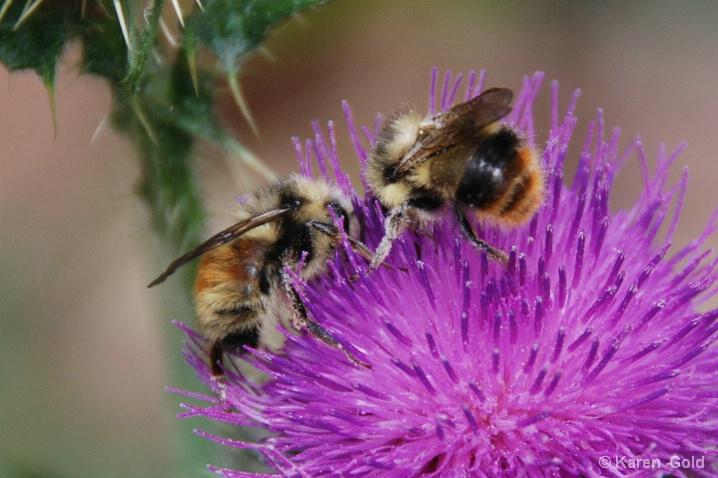 Busy Bees  - ID: 6643733 © Karen E. Gold