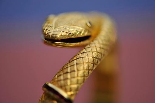 "Golden Snake      36""X55""        Canvas Pr"