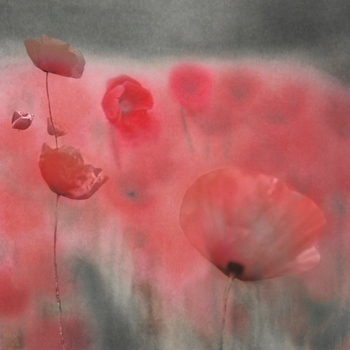 "Red Paradise   36""X36""  Canvas Print"