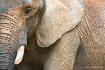 Elephant Texure