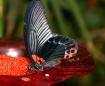 kaylins butterfly