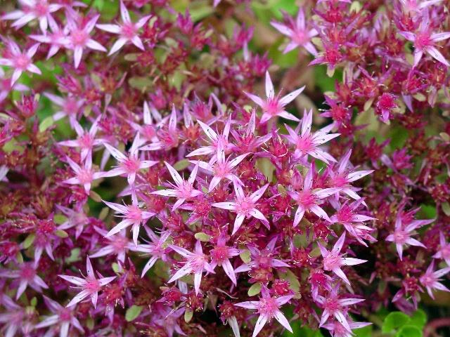 Pretty Pink Stars