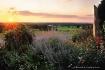 sunset_over_flowe...