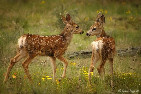 Fawns in a Field