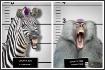 Animal Mugshots: ...