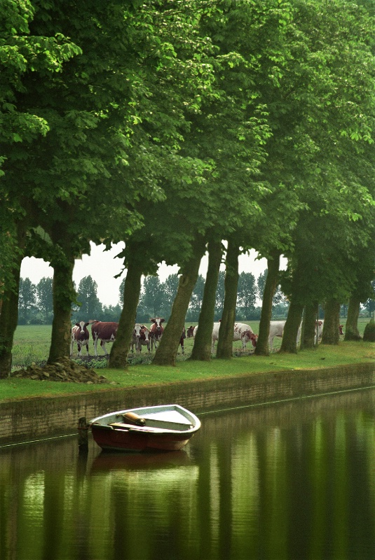 Holland canal with boat and cattle