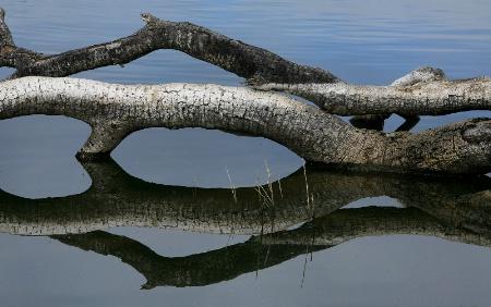 NATURE  REFLECTION  # 4