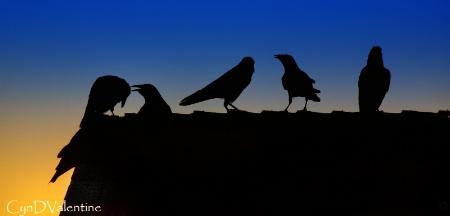 The Crow's Nest
