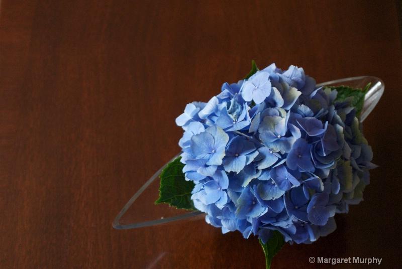 Hydrangea 3 - ID: 6760775 © Margaret M. Murphy