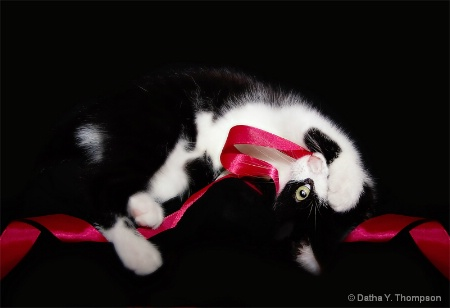 What's Black & White & Red All Over?